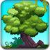 宝藏森林逃离