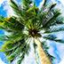 棕榈树找箭靶
