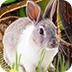 需要帮助的复活节兔子