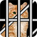 救出被困笼子的猫