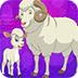 救援绵羊与羔羊